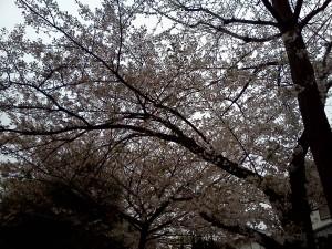 2012年4月13日撮影